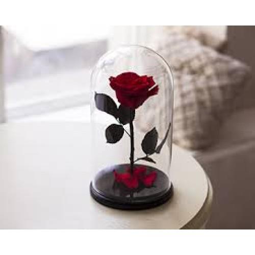 Купить на заказ Заказать Роза в колбе Красная с доставкой по Алматы с доставкой в Алматы